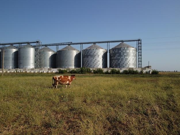 수확 곡물을 위한 농업 지역 농업 저장에 있는 곡물 엘리베이터 금속 곡물 엘리베이터