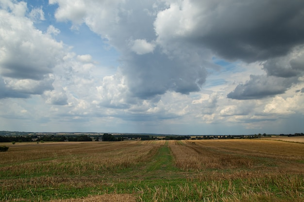 Grain field after harvest