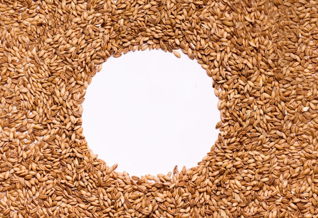Grain frame on a white background. copy space. harvest