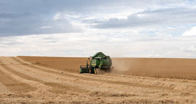 A grain harvester and combine are working in the field.