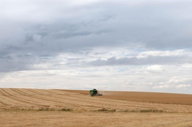 Grain harvesting using combine harvesters on the field