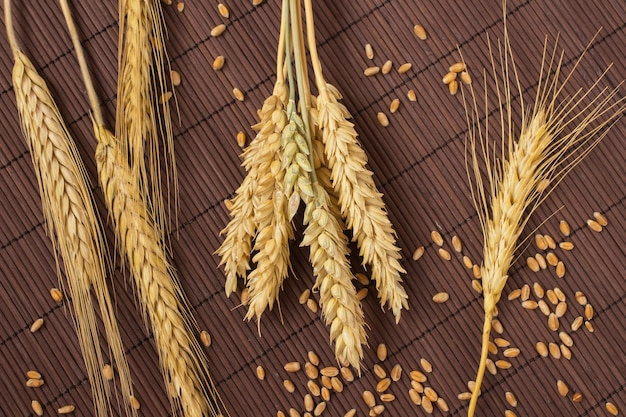 Grains, spikelets of wheat and barley on a brown background