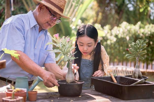 할아버지와 손녀는 집에서 정원에 나무를 심습니다. 여름 휴가에 가족과 함께 은퇴 연령 생활 방식.