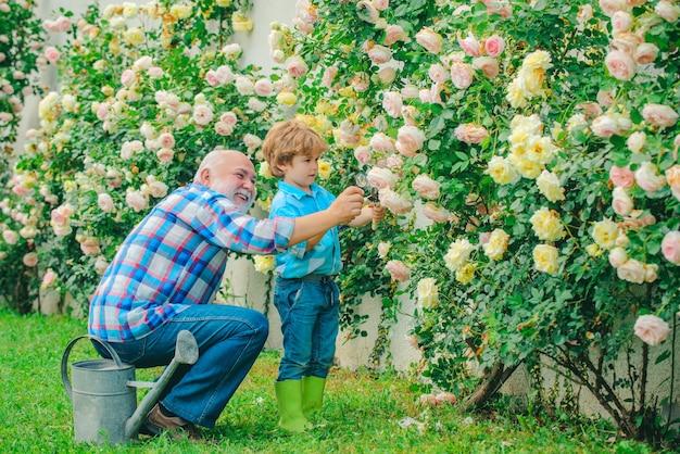 祖父と孫の老いも若きも定年の概念は、都市のシニア庭師をひげを生やしました...