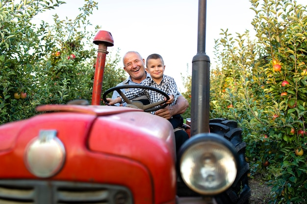 Grandfather and grandson enjoying driving retro styled tractor machine together through apple fruit orchard
