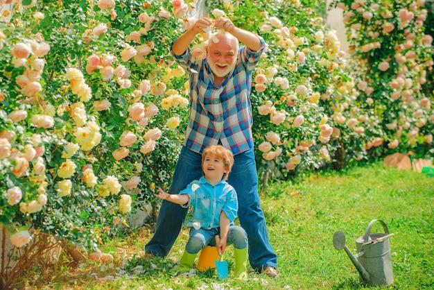 Дедушка с внуком вместе занимаются садоводством