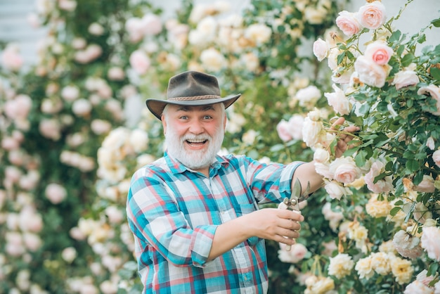 Grandfather working in garden over roses background happy gardener with spring flowers grandfather e...