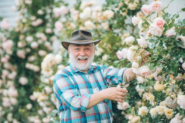 장미 배경 위에 정원에서 일하는 할아버지 봄 꽃과 함께 행복한 정원사 할아버지 전자...