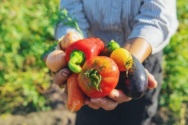 Grandmother in the garden with vegetables in her hands.