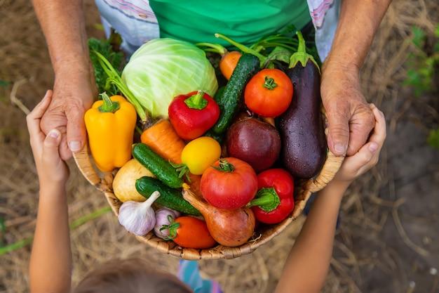 子供と野菜の収穫と庭の祖母。セレクティブフォーカス。食べ物。