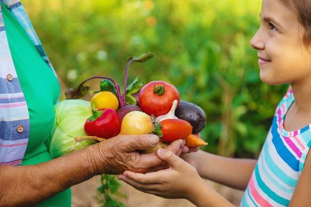 子供と野菜の収穫と庭の祖母。セレクティブフォーカス。