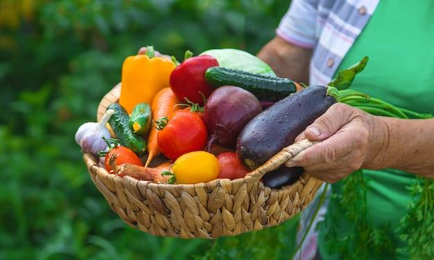 野菜の収穫と庭の祖母。セレクティブフォーカス。