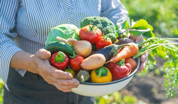 自分の手で野菜を庭で祖母。セレクティブフォーカス。