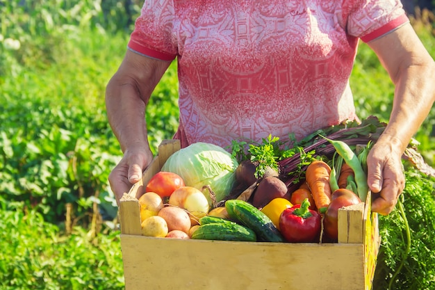 Grandmother with vegetables in the garden.