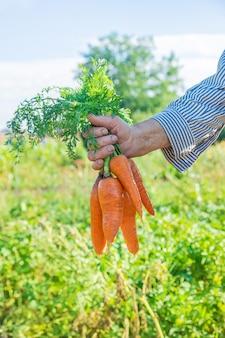 Grandmother with vegetables in her hands in the garden. organic vegetables.