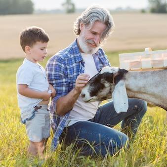 Nonno e ragazzino che giocano con le capre