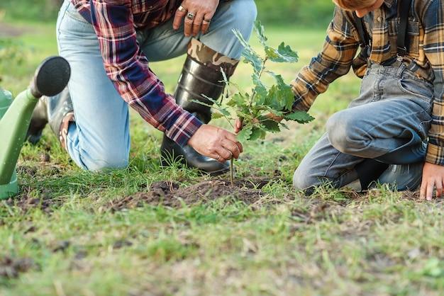 Дед с внуком сажают саженец дуба в землю среди других деревьев в лесу. сохраните понятие природы.