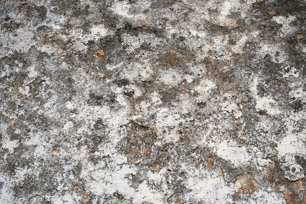 Grange wall with mold