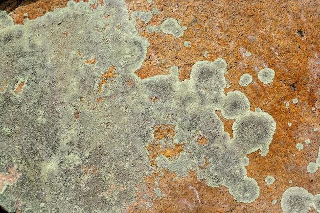 Гранитный камень, покрытый зеленым мхом и лишайником. горизонтальное изображение.
