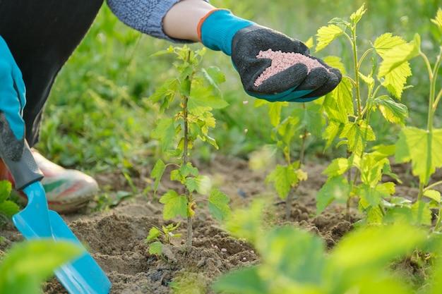 Гранулы удобрения в руках женщины садовника