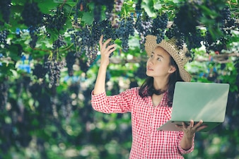 Grape farmers are happy to sell online market grapes