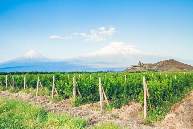 Виноградное поле в араратской долине. вид на хор вирап и гору арарат. изучение армении