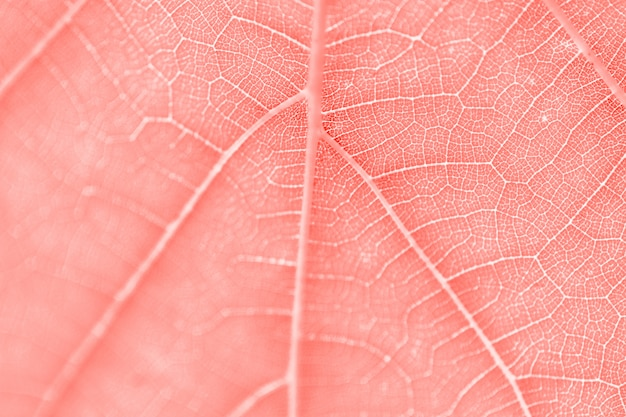Grape leaf, living coral toned, macro. close up texture with copy space for design.