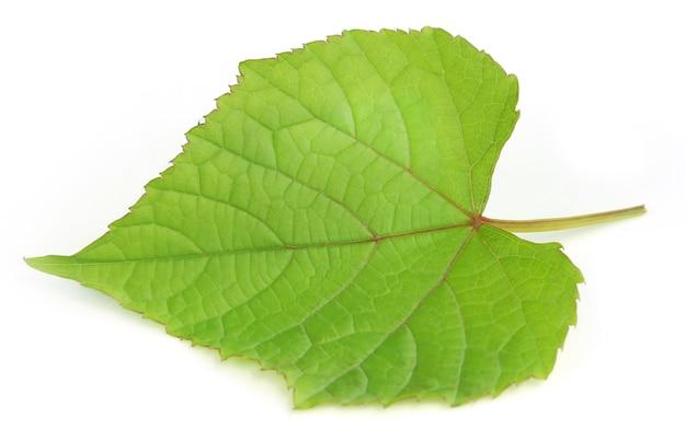 白い背景の上のブドウの葉