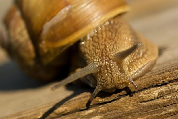 포도 달팽이 근접 촬영