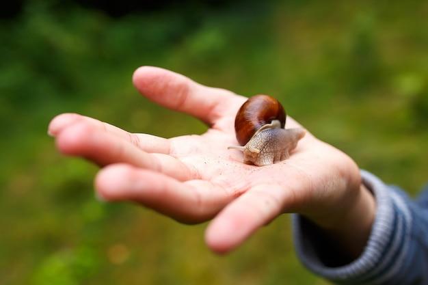 아이의 손바닥에 크롤 링하는 포도 달팽이.