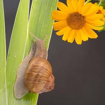 녹색 잎에 크롤 링하는 포도 달팽이입니다. 연체 동물과 무척추 동물. 진미 고기와 맛있는 음식.