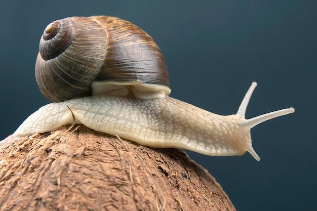 어두운 벽에 코코넛에 포도 달팽이