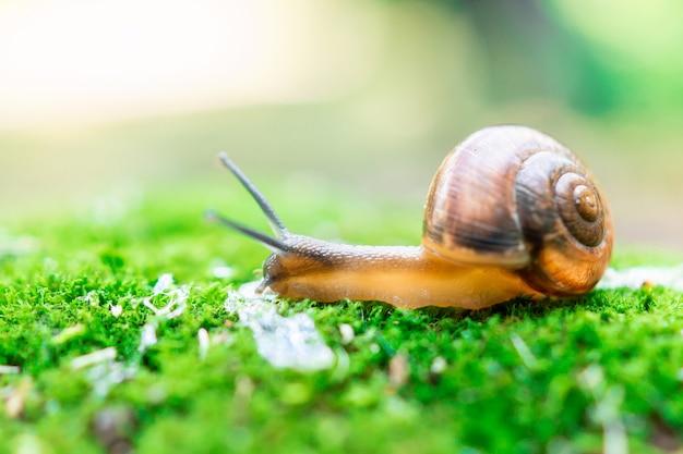 A grape snail sits on green moss