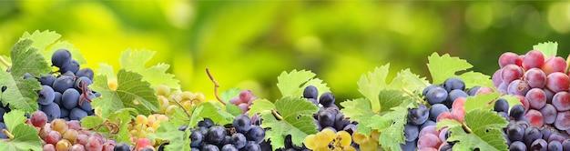 Виноград из любимого сада