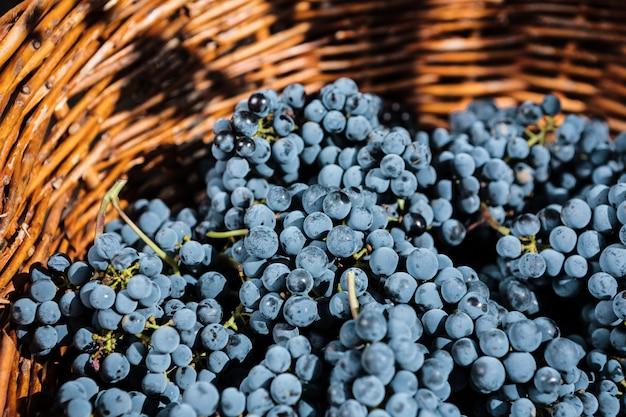 Виноград в плетеной корзине