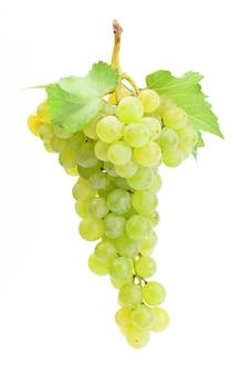 白い背景で隔離のブドウ