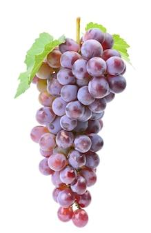 白い表面のブドウ