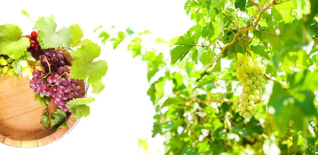 나뭇가지 콜라주에 와인과 포도 나무 통에 포도.