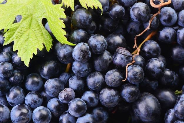 Виноград, урожай этого года