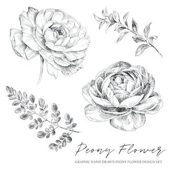Графический рисованной пион цветок и листья старинные иллюстрации, изолированные на белом фоне.