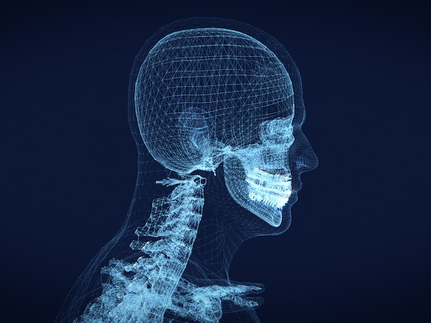 Графическое каркасное изображение человеческого черепа