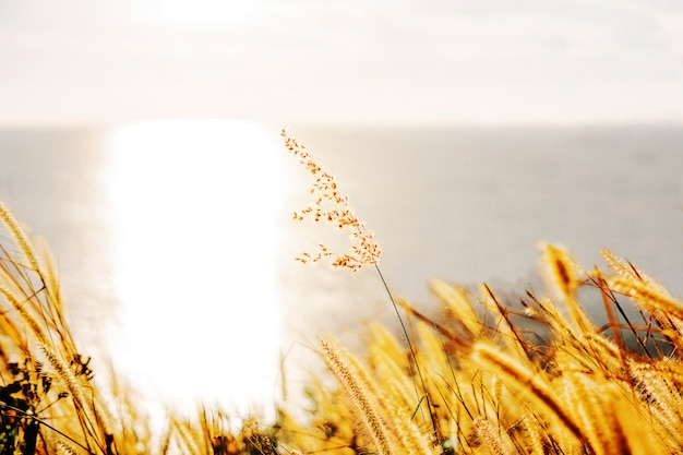 Grass alone at the seaside. with the light of the sun that shines into the sea.