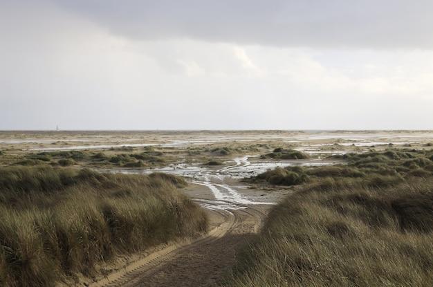 曇った空の下でドイツのアムルム島の草と砂丘