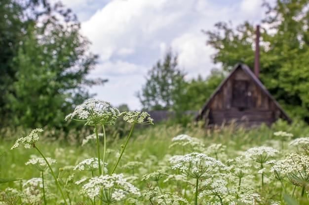 フィールドの草と花、背景に村の家