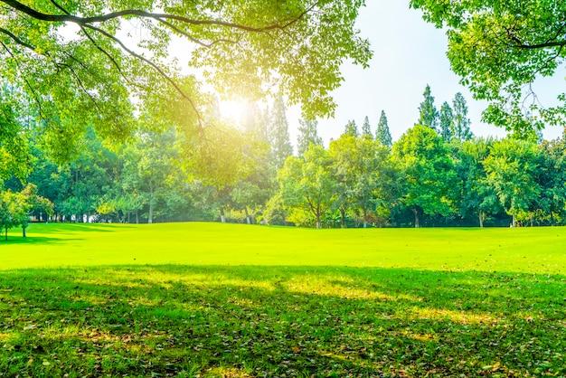 공원에서 잔디와 녹색 숲