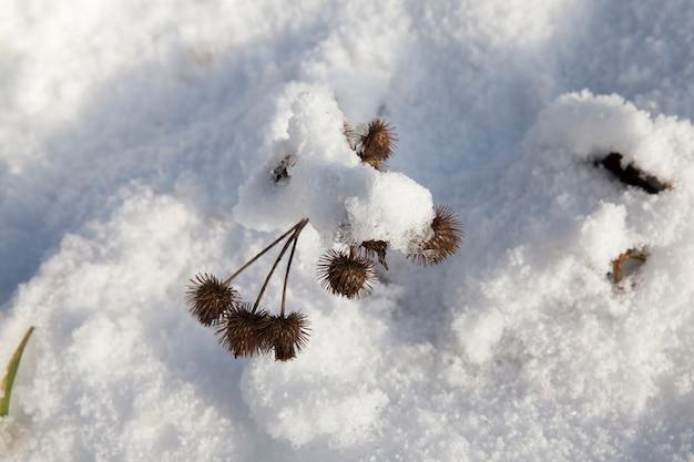 Трава и снег зимой, снег, выпавший во время снегопада и сухая трава, снегопад зимой и белый пушистый холодный снег и трава
