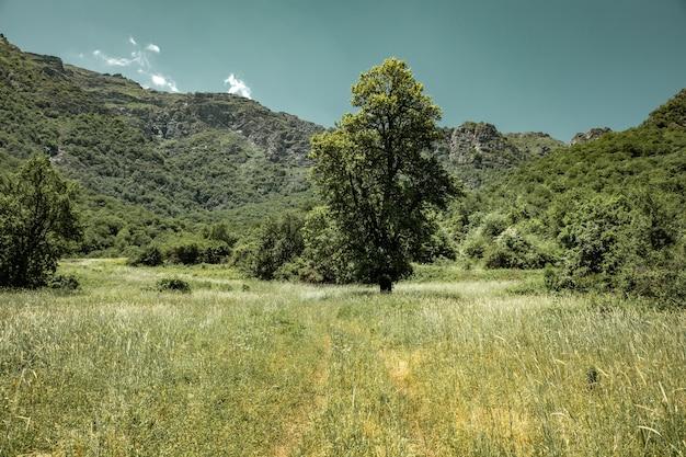 Трава и деревья в лесу в горах