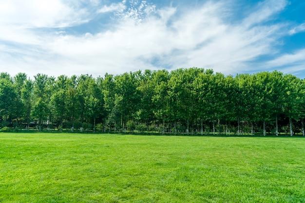 Трава и деревья в парке под голубым небом