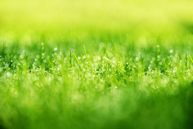 草の背景:美しいボケ味を持つ抽象的な自然な背景の緑の草。早朝の草の上に露します。