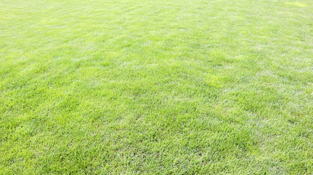 Grass background on a golf course